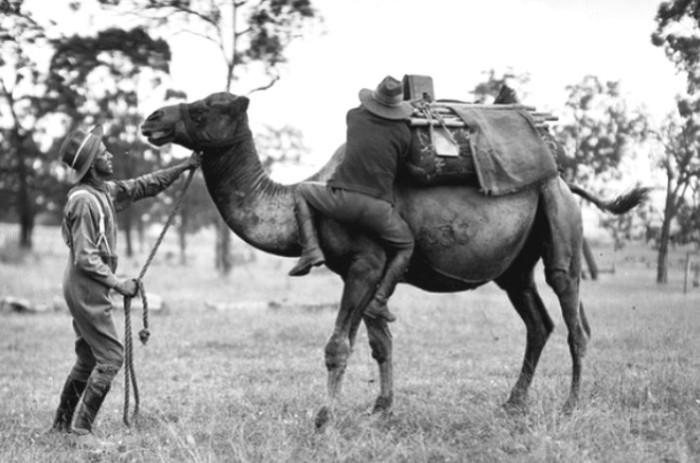 Учения кавалеристов австралийского верблюжьего корпуса.   Фото: commons.wikimedia.org.